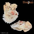 enlarge photo